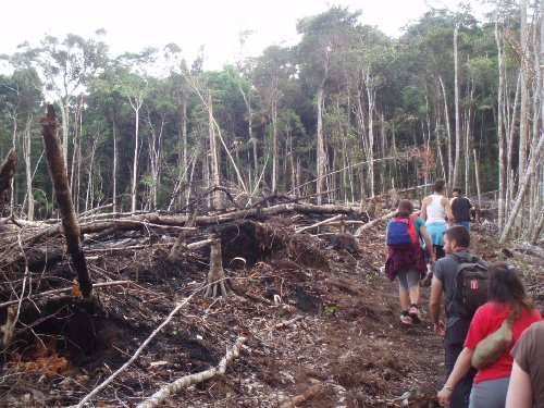 asean the effects of illegal logging Illegal logging is a major contributor to the loss of indonesia's forests a 2007 united nations environment program report estimated that 73-88% of timber logged in indonesia is illegally sourced.